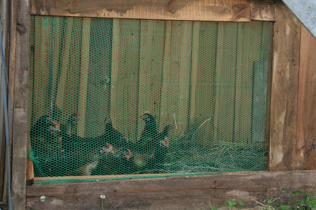 もりおかぶどう園の鶏小屋