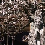 清滝寺の観音像