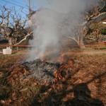 柿畑の葉っぱ焼き