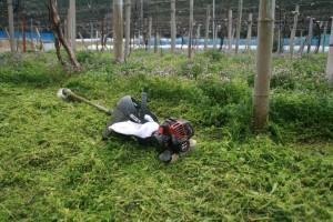 ぶどう園の草刈