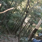 かかり木の始末