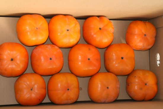 8キロ次郎柿