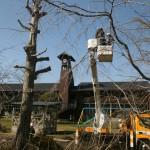 法隆寺に並んで記載された木造小学校の樹の低木化に我ら高山会活躍