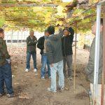 香川県農業試験場府中果樹研究所へシャインマスカットの栽培を習いに行って来ました。