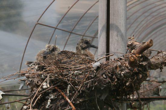 鳩2羽で温める