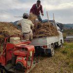 藁を運搬車で持ってきて積み込み