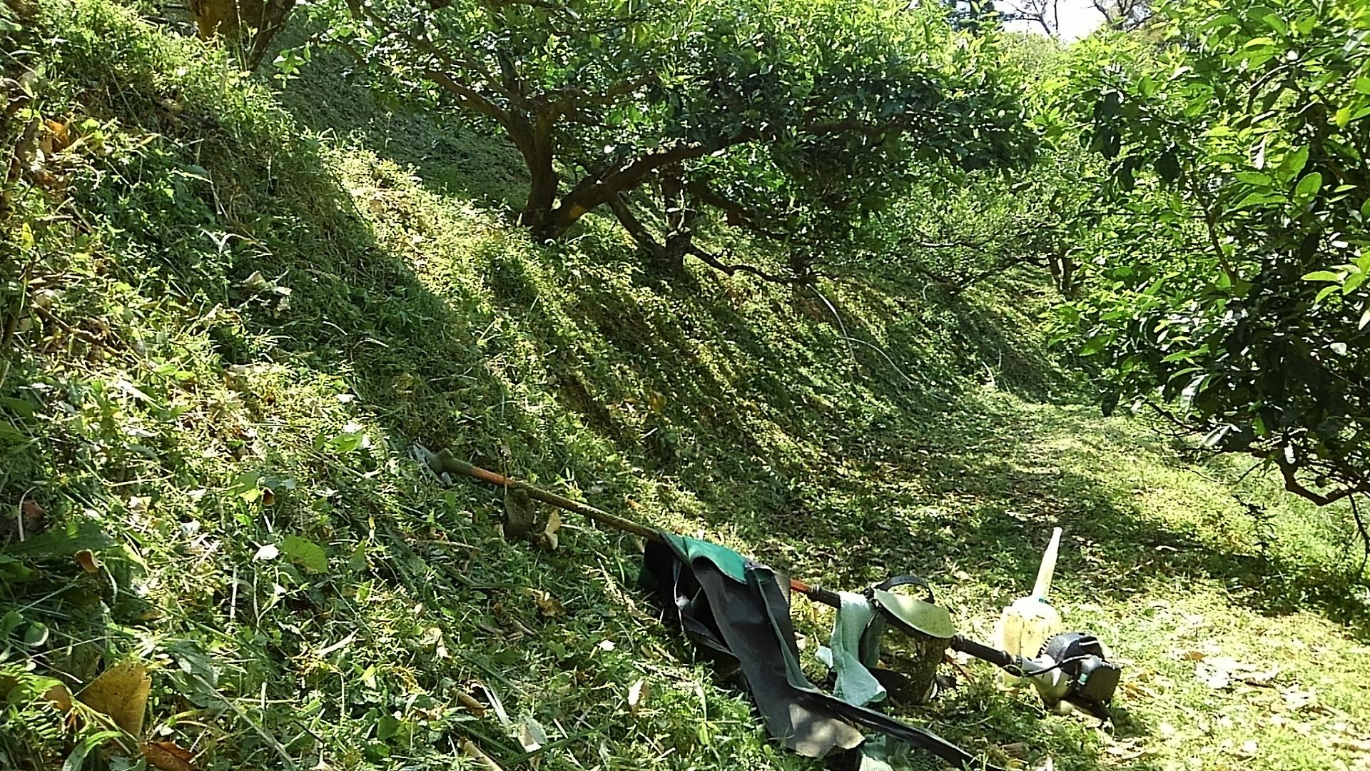 文旦山の草刈り
