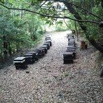 今年も文旦の受粉にミツバチも応援に来てくれました。