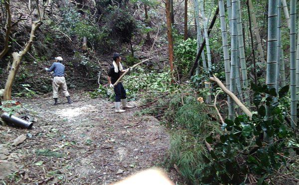 ヒノキの木が根こそぎ山道に懸る